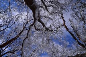 奈良県御杖村 三峰山 霧氷