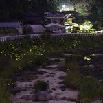 6月9日【2016】御杖村のホタル(蛍)<奈良県のホタル(蛍)/御杖村の三季館周辺は百万ドルの夜景【ほたるの群れ】