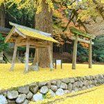 11月21日【2016】 御杖村春日神社『ラッパ銀杏』…一面 黄色の世界