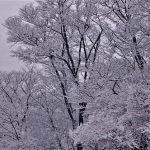 1月23日 奈良県丸山公園から冬の息吹をとどける…日本酷寒の風景写真