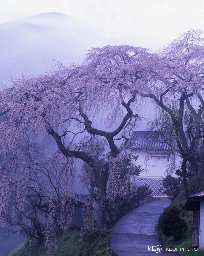 日本の風景『春雨』