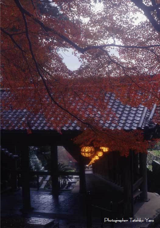 日本の風景【奈良の秋・紅葉燃ゆる】