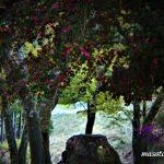 4月14日【2018】奈良県御杖村 丸山公園の春「山桜とミツバツツジと椿」