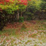 5月20日【2018】三峰山は白ツツジ「シロヤシロ」が花盛り・・・ただ…