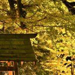 11月15日【2019】ようやく秋…秋の気配