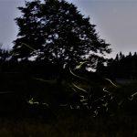 6月8日【2020】御杖村の夜空に…ホタル飛び交う