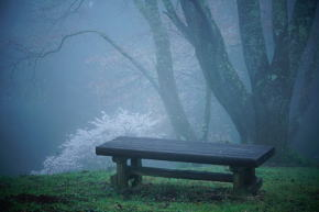 奈良県御杖村 丸山公園 桜