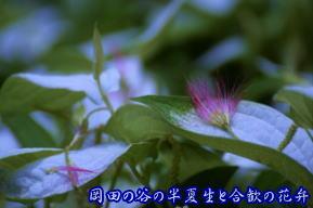 岡田の谷の半夏生・奈良県御杖村
