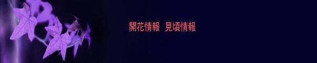 奈良県御杖村 観光名所/開花・見頃情報