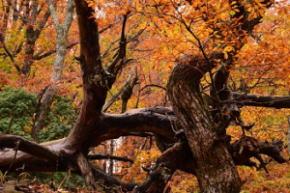 秘境 御杖村桃俣の紅葉