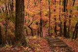 奈良県の紅葉 4
