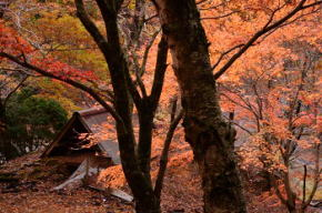 奈良県御杖村 西杉自然遊園の紅葉