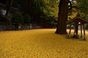 奈良県御杖村 春日神社の紅葉