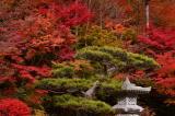 奈良県の紅葉 2