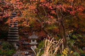 奈良県御杖村 草野の庭の紅葉