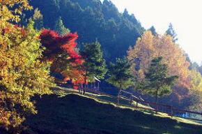 みつえ青少年旅行村【川遊び・キャンプ場】/奈良県御杖村