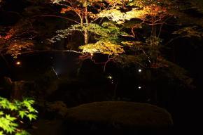 北畠氏館跡庭園の紅葉ライトアップ
