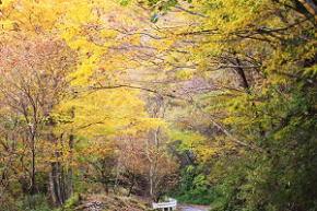 奈良県御杖村三峰山 紅葉
