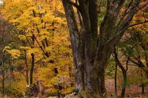 屏風岩公苑の紅葉