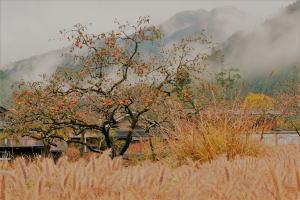 JR名松線沿いの隠れ紅葉スポット