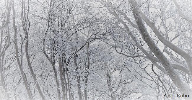 三峰山の霧氷