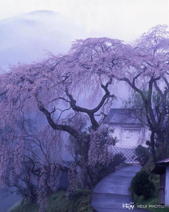 奈良県/日本・風景写真 前田ケイジ