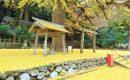 11月21日【2016】 御杖村春日神社『ラッパ銀杏』...一面 黄色の世界
