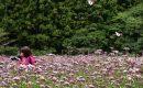10月15日【2017】奈良県曽爾村に香り漂うフジバカマ...そしてアサギマダラの共演💛💛💛