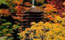 11月16日【2017】今が旬、日本の四季『紅葉』をあなたに/ 談山神社・北畠氏館跡庭園