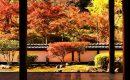 11月24日【2018】古都・奈良の紅葉を求めて...女ひとりぶらり旅『正暦寺&丸山公園』