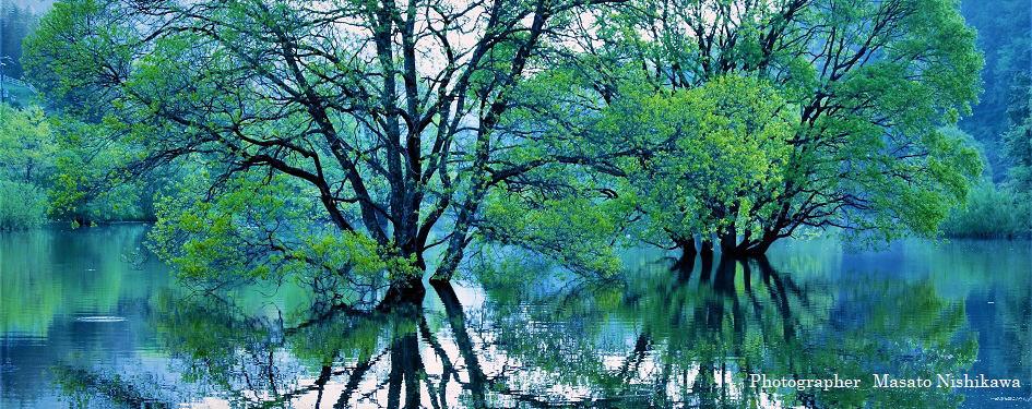 奈良の新緑