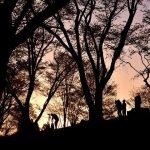 4月18日 丸山公園の桜は。。。そして屏風岩公苑の桜は今