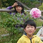 5月3日 丸山公園の牡丹は満開に!大輪の花も!!!