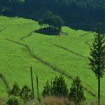 5月12日 みつえ高原牧場は新緑の香り⇒そして自然山野草園⇒そして丸山公園
