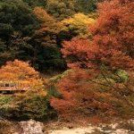 11月10日 JR名松線沿い…今が旬の紅葉 隠れスポット情報