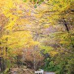 11月12日 御杖村丸山公園から始まる紅葉観光名所の見頃情報