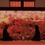 11月15日 奈良県天川村みたらい渓谷から兵庫県猿尾滝・高源寺・安国寺/日本の秋を探して