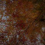 11月17日 御杖村丸山公園も秋。。。紅葉gradationが…