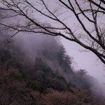 4月18日【2017】屏風岩公苑「奈良県曽爾村」の桜や野鳥は今。。。