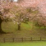 日本の風景写真家・前田ケイジ氏日本の春【2017奈良県御杖村丸山公園に於いて】を撮る