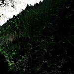 6月23日【2017】御杖村「奈良県」を飛び交うホタルたち…