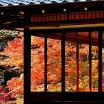 11月21日【2017】日本列島・紅葉最前線 京都から