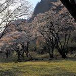 4月10日【2018】伊勢本街道沿い 今年の春「桜」を彩る屏風岩公苑の山桜。。。見頃です!!!