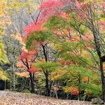11月11日【2018】秋真っただ中ですよ!!三峰山頂から裾野へ…そして紅葉名所からの便り(^_-)-☆