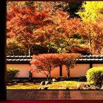 11月24日【2018】古都・奈良の紅葉を求めて…女ひとりぶらり旅『正暦寺&丸山公園』