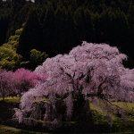 4月13日【2019】街道(伊勢)沿いの春(桜)を撮る。。。(^^)/