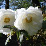 5月12日⇒やまと姫マラソン2019 inみつえ…花々や山野草が見頃の御杖村神末地区で