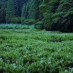 6月28日【2019】御杖村のホタルはラストステージ…季節は移り、緑映える半夏生・不動の滝へ