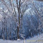 2月9日【2020】御杖村の空は凍雲…三峰山は霧氷そして高見山は霧氷の気配