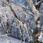 11月19日【2017】御杖村 三峰山に初雪「霧氷?」御杖村に冬到来!!!